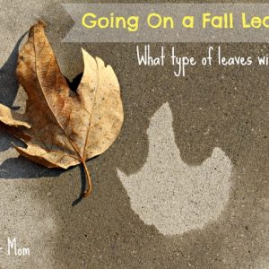 Spray Bottle and Collecting Leaves: We're Going on a Leaf Hunt!