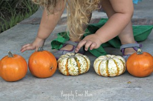 Counting her pumpkins
