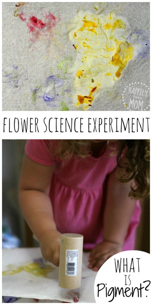Flower science experiment to learn about pigment