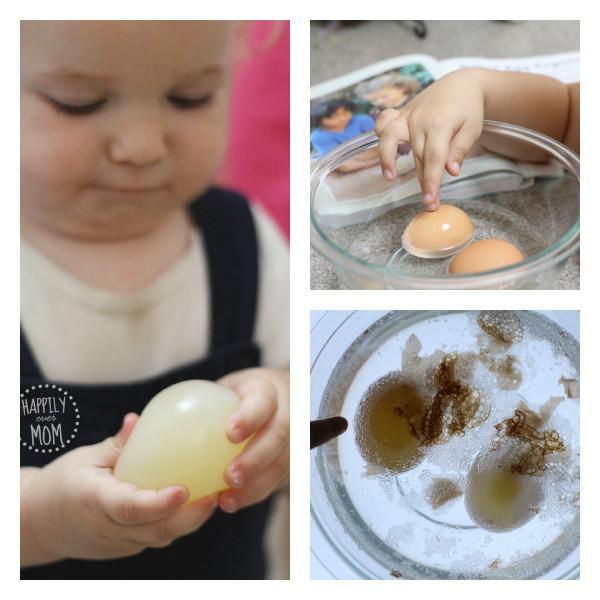 egg-experiment